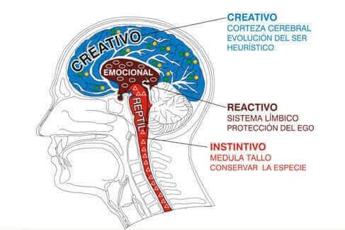 Tipos cerebro 1